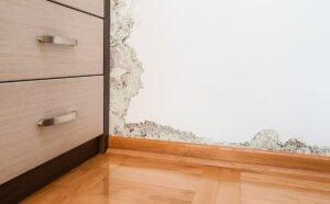 Plumber, water leak, leak detection, water damage, plumbing, plumbing problems